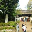 「浮岳山深大寺」も紅葉を纏い始めた!!