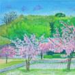 倉敷川の河津桜を描く
