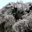 永泉寺の桜 ( 福島県田村市 2018.4.14 )