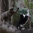 猫パンチじゃぁ~