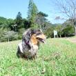今日は妹の通院日  田舎の公園で癒し係の桃ちゃん・・・