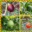 今回の志度行きは天気が悪くて、秋野菜を植える準備をして来ました。