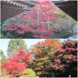 一神社と三寺の紅葉狩りへ出かけました