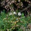 友人と初秋の兵庫県北の花を訪ねる     2018.09.02.(1)