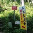 御岳 レンゲショウマを見に行ってきました。