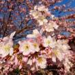 京都府立植物園の早春の花(2)-2