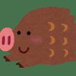 ラグーナ近辺 イノシシに噛まれる