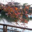 今日の井の頭公園とジブリ公園