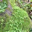 ハワイのお寺の庭の苔