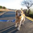 朝陽がまぶしい平日のゆったり朝散歩 ♪