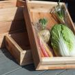 人参観が変わった!野菜木箱