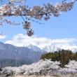 4月13日撮影 さわやかウォーキング号 その4 飯田線にて桜と中央アルプスより