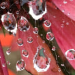 雨の日 蜘蛛の糸と雨粒