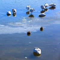本日の諏訪湖