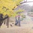 銀杏の樹の下