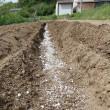 畝間に肥料