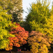 中島公園も紅葉が始まっています。