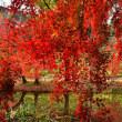 泉自然公園の秋
