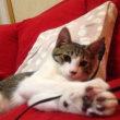 ♀猫こむぎのゴム紐好きの原点を見つけました🎵 お宝映像あり
