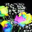 あら不思議虹色の薔薇