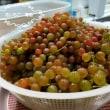 花いちごで採れた 葡萄です。召し上がれ★