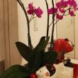 シャンソン歌手リリ・レイLILI LEY 長生きな蘭の花達 音楽ビルで 満面笑顔
