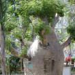 バオバブの木!