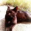 「全米 野良猫の日」!