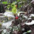 水戸の実と種(4)