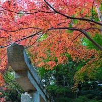 三連休の中日 11月24日(土)晴れ時々曇り