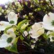 桜の返礼に送られた花