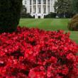 トランプ大統領ガンバレ!【米国 ホワイトハウスからのメールマガジン2018-08-12】  決心する