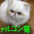猫ファルコン~Qたろうニャ♪(=^ω^=)YouTube貼れた!唄付き⁉ネバーエンディング・ ストーリー