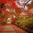 〇【日本の美】・・・・・・京都・毘沙門堂紅葉と立山に晩秋を求めて歩人達!