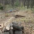 果樹の接木と移植