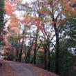 紅葉は今が盛りです