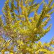 深山イギリス庭園の黄葉