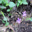 鍋割山の植物たち (群馬県・赤城山)