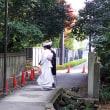 熱い麦茶をポットに入れて京都植物園へ
