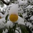 ユウコウの実に雪