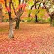 12月6日 京都ぷら~り Ⅳ
