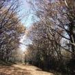 枯葉の絨毯を踏んで「よこやまの道」散歩