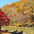 滝野すずらん丘陵公園 2017年10月 その1