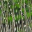 猛禽オオタカの枝止まりと~可愛いエナガ・メジロの姿を・・・