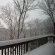 #1143:大雪でした。