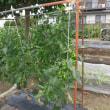 秋野菜から冬野菜へ