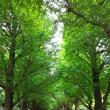 神宮外苑の銀杏並木の今