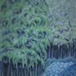 房総半島 梅雨の竹林