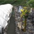 榛原萩原・玉立の水口マツリ