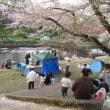 さくら祭り (境川)